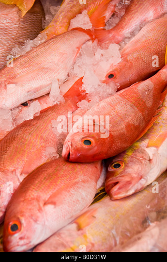 Red snapper for sale stock photos red snapper for sale for Fish in spanish