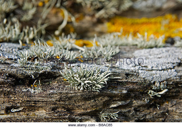 coastal moss on rocks in cornwall,uk - Stock Image