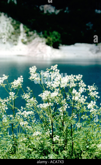 Wildflowers at Fiastra Lake in the Sibillini National Park Le Marche ,Italy - Stock Image