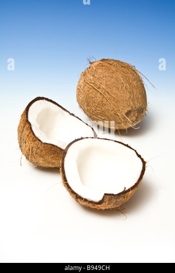 Coconut on a graduated blue studio background. - Stock Image