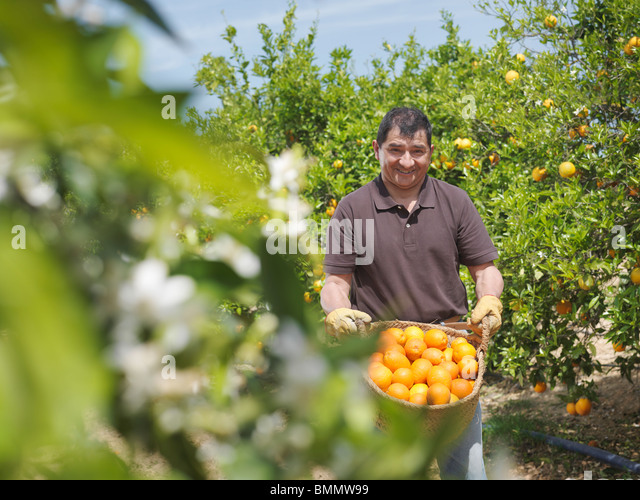 Man showing basket full of oranges - Stock Image