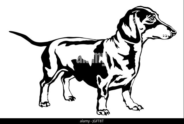 Dachshund Dog Art Stock Photos Amp Dachshund Dog Art Stock