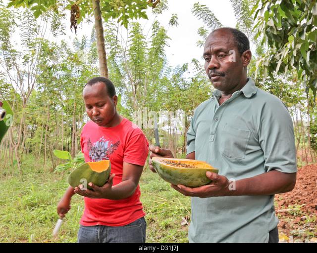 Zanzibar Coffee Maker Instructions : Organic Farming Africa Stock Photos & Organic Farming Africa Stock Images - Alamy