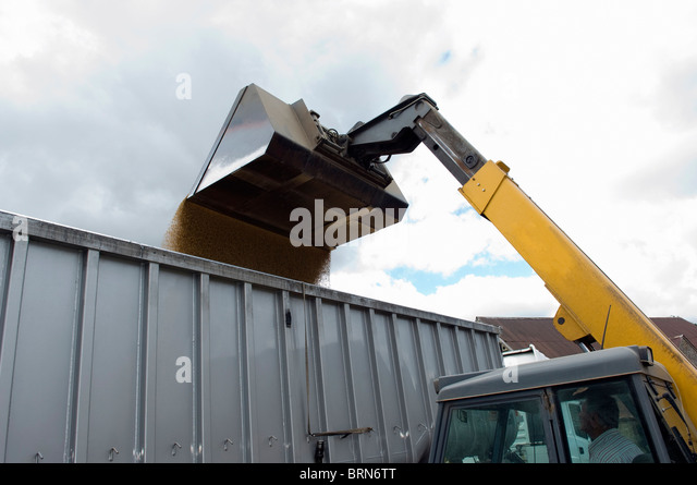 Loading grain into lorry - Stock Image