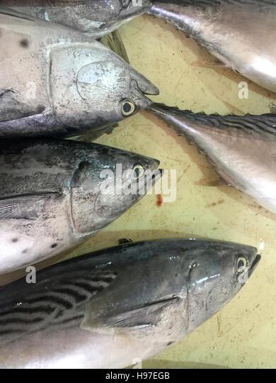 Close up of yellow fin tuna on display at fish market. - Stock Image