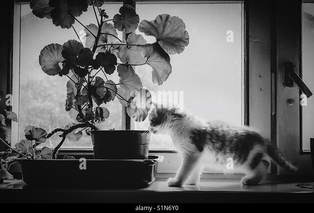 A kitten discovers a flower - Stock Image