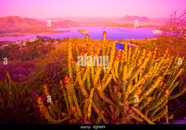 Udiapur City and cactus, palace on Lake Pichola, Rajasthan, India, founded by Maharana Singh in 1559 - Stock-Bilder