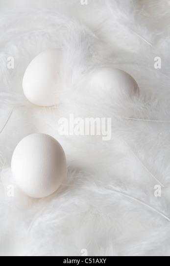 still life of three eggs on feathers - Stock Image