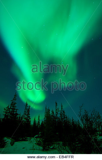 The snow is lit up by the northern lights dancing in the sky. - Stock-Bilder