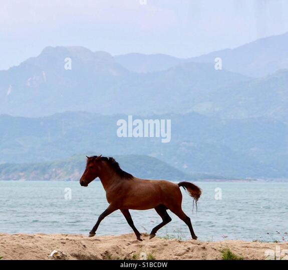 Wild Horse - Stock Image