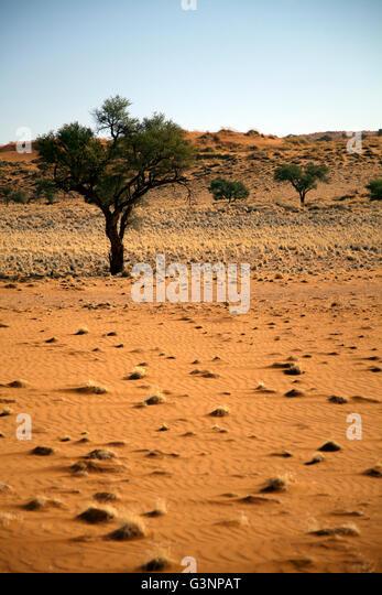 Namibia Desert Lodge Stock Photos Amp Namibia Desert Lodge
