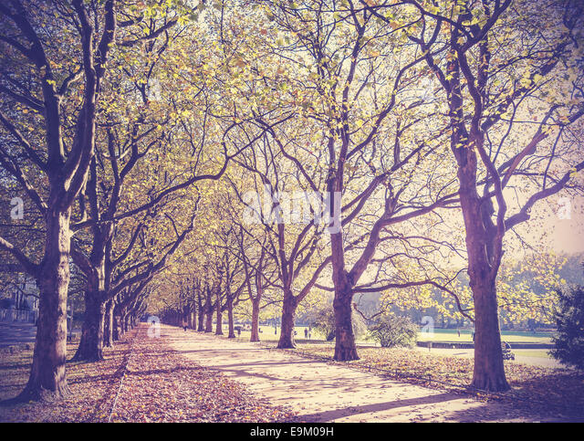 Vintage filtered picture of an autumn in park. - Stock-Bilder