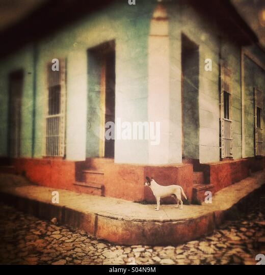 Dog on street corner in Cuba - Stock Image