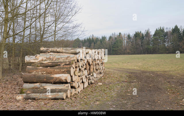 Freshly cut tree logs piled up near a muddy way - Stock Image