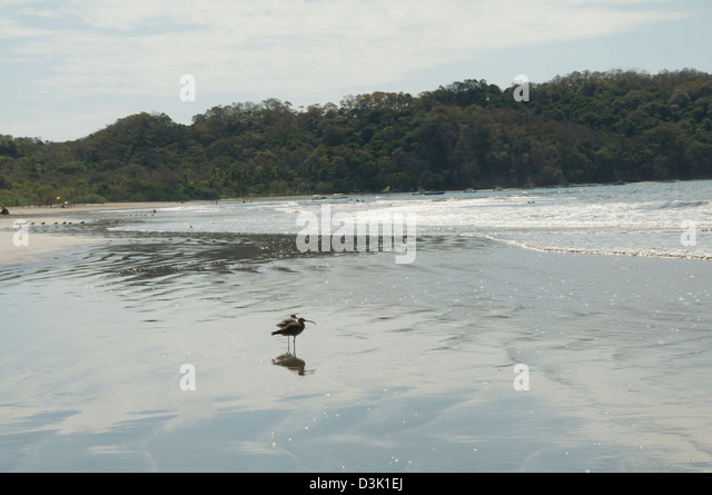two birds on the beach with a reflection in the water - Stock Image