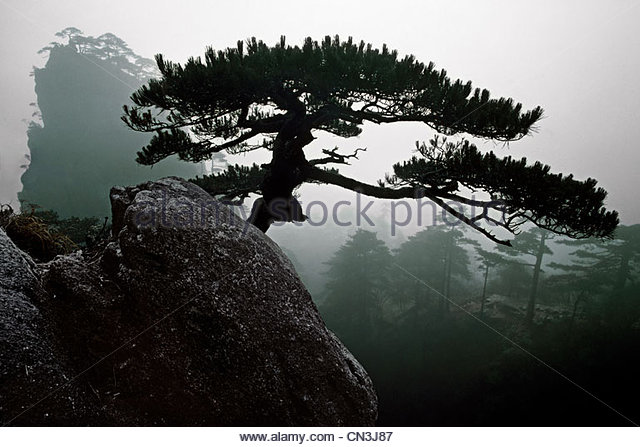 Huang Shan, Anhui Province, China - Stock Image