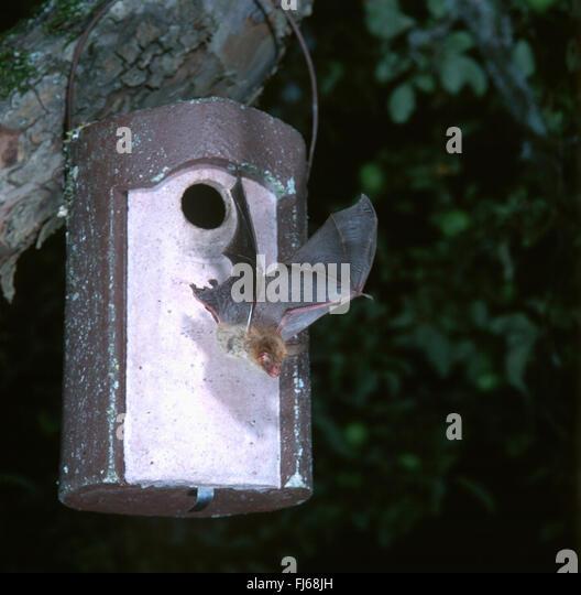 Bats nest stock photos bats nest stock images alamy for Bat box obi
