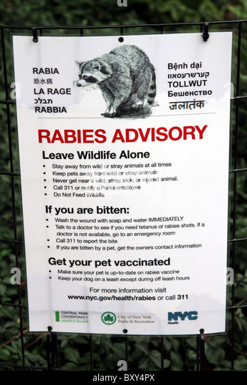 Rabies advisory warning sign in Central Park in New York, America - Stock Image