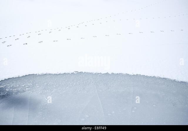 Animal tracks on frozen snow-covered lake, Colorado, America, USA - Stock-Bilder