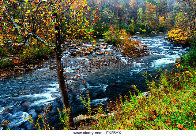Fall color, Cherry River, West Virginia, USA - Stock Image