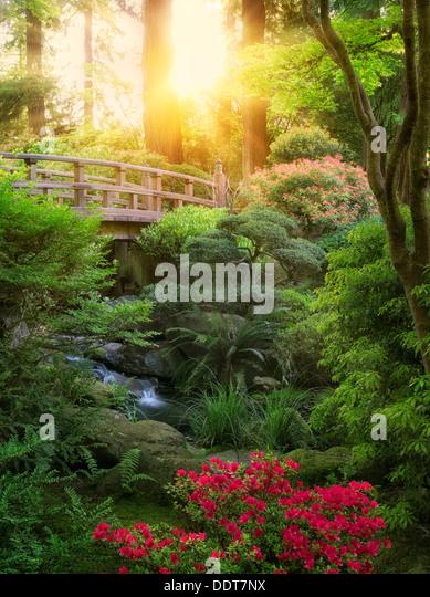 Bridge, stream and blooming Rhododendron. Portland Japanese Garden, Oregon - Stock Image