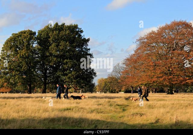 Dog Day Near Hampton Court