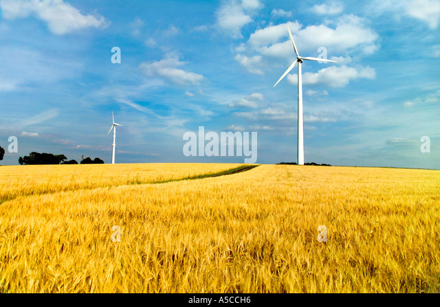Wind turbines in field - Stock Image