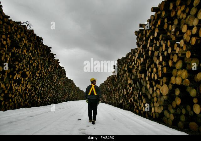 An Abitibi consolidated employee makes his way down the center of road covered on the both sides with logs. The - Stock-Bilder