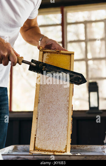 processing the honey - Stock Image