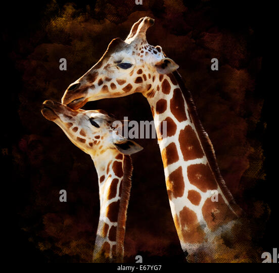 Watercolor Digital Painting Of  Mother And Baby Giraffes On Dark Background - Stock Image