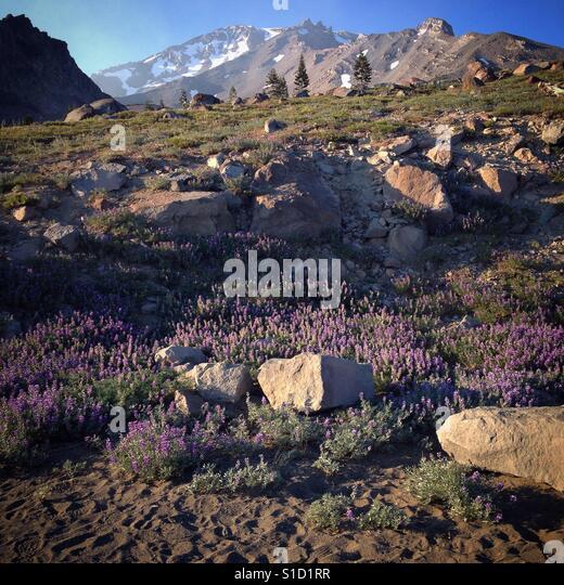 Mount Shast - Stock Image