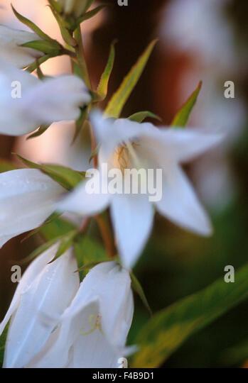 catalogue 2 close-up color image detail flower plants simplicity summer Swedish catalogue 3 vertical white - Stock-Bilder