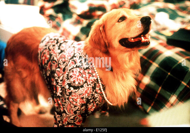 AIR BUD CREDIT GIG - Stock Image