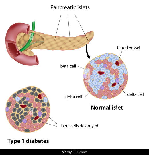 Pancreas Diagram Stock Photos & Pancreas Diagram Stock ...