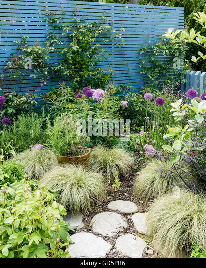 Alliums and grasses in courtyard garden with wooden slat screen painted in Pigeon from Farrow & Ball - Stock Image