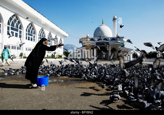 pigeon muslim girl personals Names and their meaning  melda - girl with slender and young body melek - angel melih  mümin believer, muslim mümtaz select, distinguished.