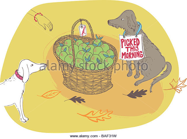 Fresh Organic Apples - Stock Image