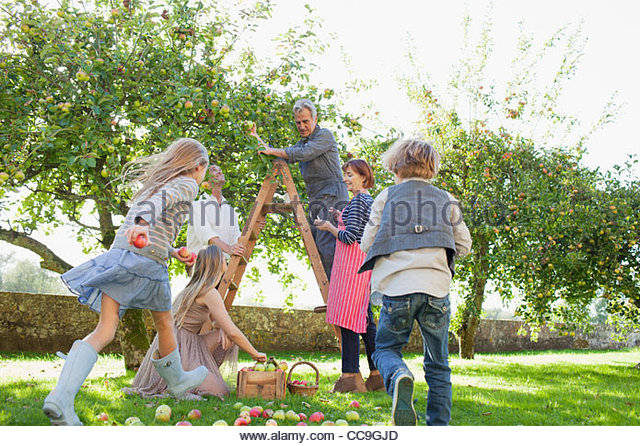 Multi-generation family harvesting apples in orchard - Stock Image