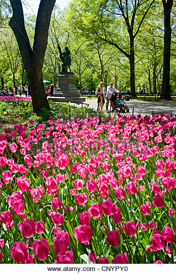 People walking near flowers in Central Park, New York City in spring season. - Stock Image
