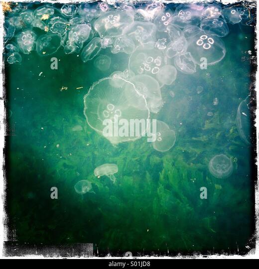 Jellyfishes on seaside - Stock Image