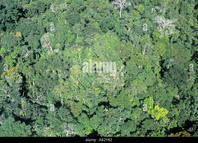 Amazon region, North West Brazil - Stock Image