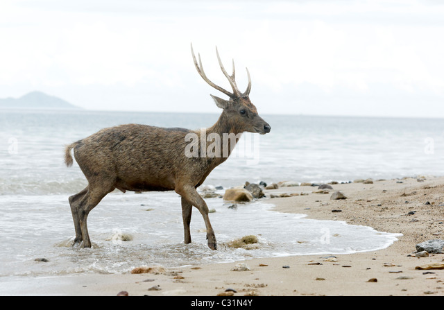 """deer island single women With amazing graphic depictions of """"white-tailed deer"""" our fire island designers worked hard to create a • 40 singles thread weight fire island hats for."""