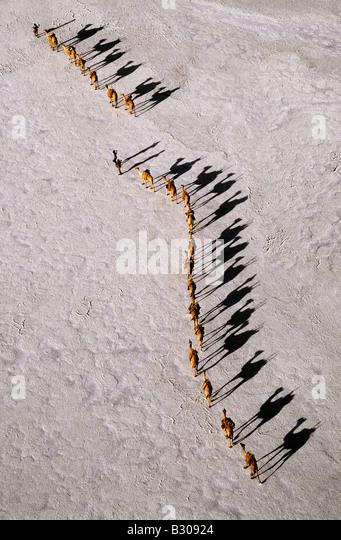 Djibouti, Lake Assal. An Afar camel caravan crossing the salt flats of Lake Assal, as shadows lengthen in the late - Stock-Bilder