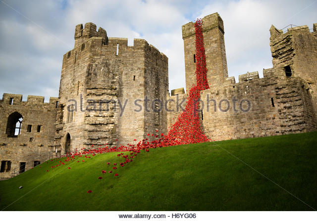 Weeping window - remembrance poppies at Caernarfon Castle, October 2016 - Stock Image