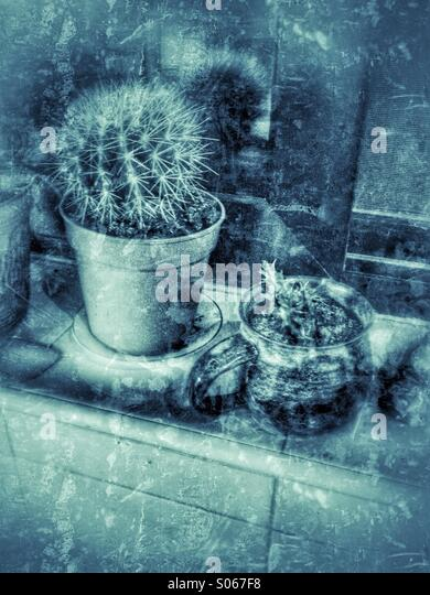 Kitchen cacti on a window sill - Stock Image