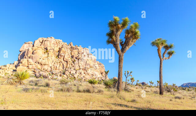 Beautiful landscape in Joshua Tree National Park, California, USA. - Stock-Bilder
