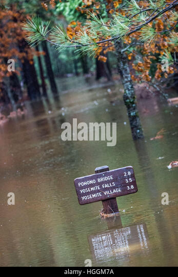 California, USA. 9th Jan, 2017. The Merced River crested overnight, saturating meadows. Yosemite Valley is expected - Stock Image