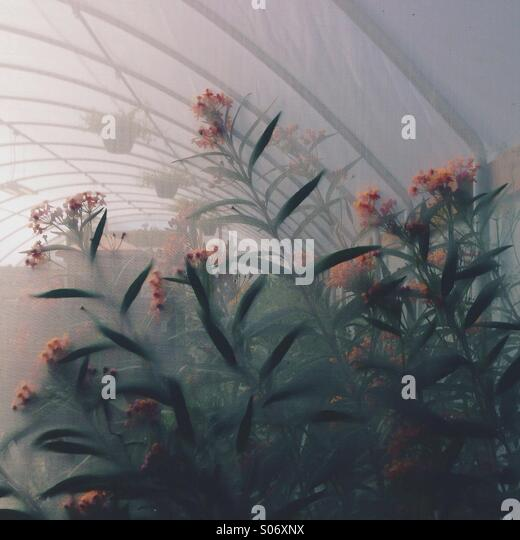 Butterfly Garden - Stock Image