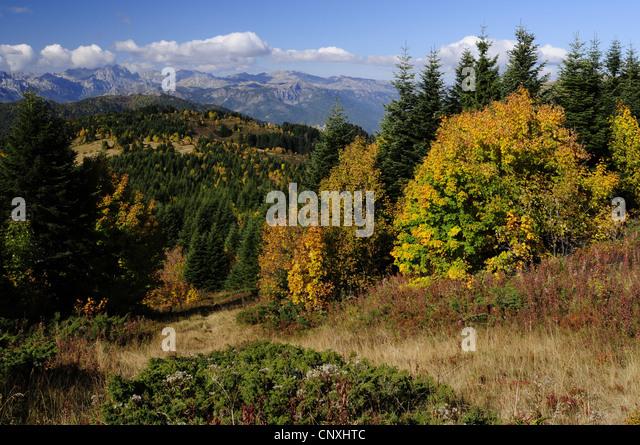 mountain meadow autumn above - photo #7