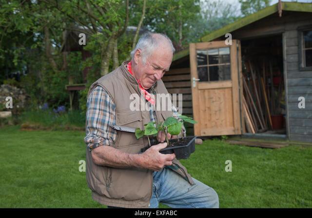 Senior man, handling seedlings in garden - Stock Image